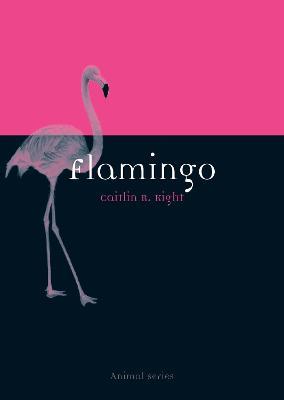 Flamingo by Caitlin R. Kight