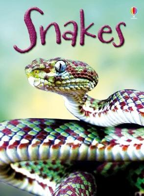 Snakes by James Maclaine