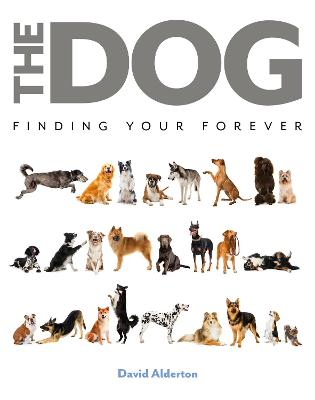 The Dog: Finding Your Forever by David Alderton