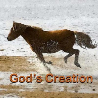 God's Creation book