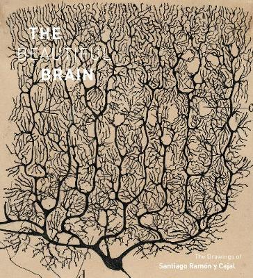 Beautiful Brain: The Drawings of Ramon y Cajal by Larry Swanson
