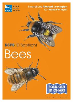 RSPB ID Spotlight - Bees by Marianne Taylor