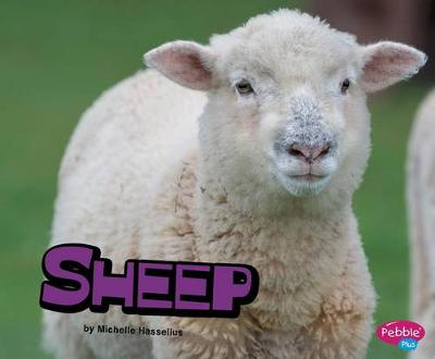 Sheep by Michelle Hasselius