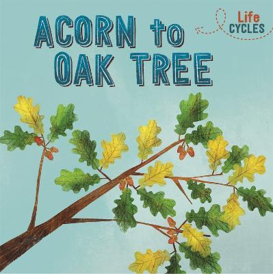 Life Cycles: Acorn to Oak Tree by Rachel Tonkin