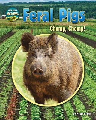Feral Pigs by Kevin Blake