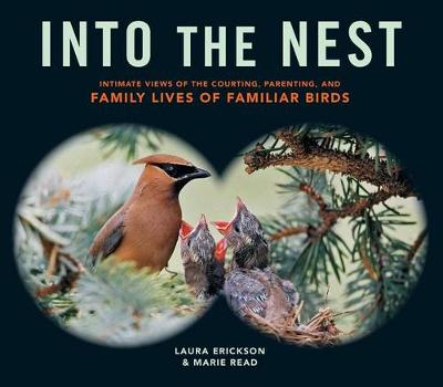 Into the Nest by Laura Erickson