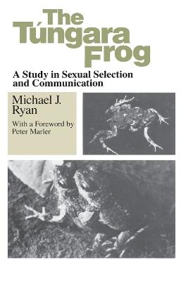 Tungara Frog by Michael J. Ryan