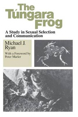 Tungara Frog by Michael J. Ryan