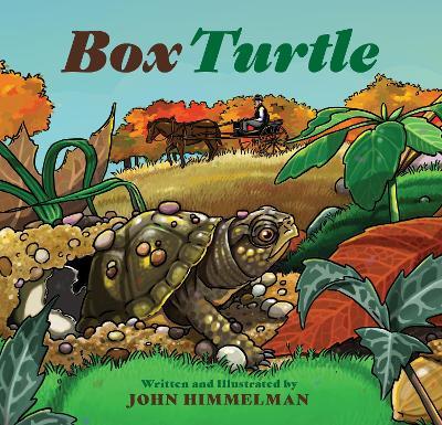Box Turtle by John Himmelman