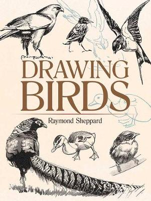 Drawing Birds by Raymond Sheppard