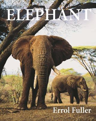 Elephant by Errol Fuller