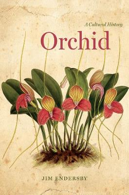 Orchid by Senior Lecturer Jim Endersby