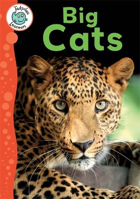 Tadpoles Learners: Big Cats by Annabelle Lynch