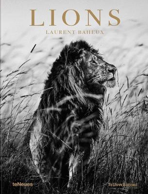 Lions by Laurent Baheux
