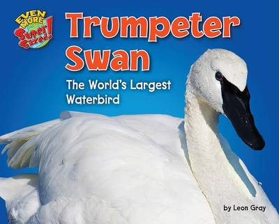 Trumpeter Swan by Leon Gray