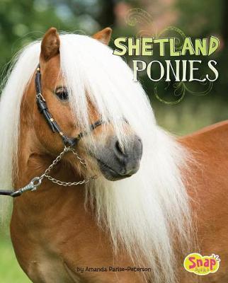 Shetland Ponies by Amanda Parise-Peterson