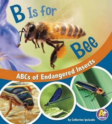 B Is for Bees book