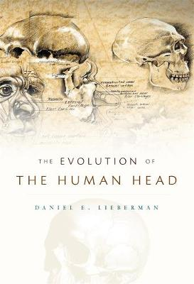 Evolution of the Human Head book