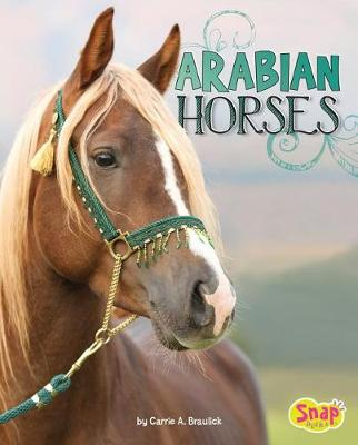 Arabian Horses by Carrie A. Braulick