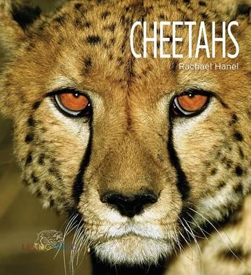 Cheetahs by Rachael Hanel