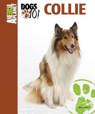 Collie by Terry Albert