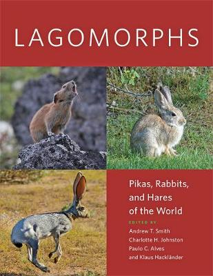 Lagomorphs by Andrew T. Smith