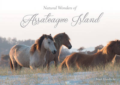 Natural Wonders of Assateague Island by Mark Hendricks