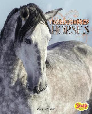 Thoroughbred Horses by John Diedrich