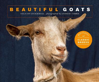 Beautiful Goats: Portraits of champion breeds by Felicity Stockwell