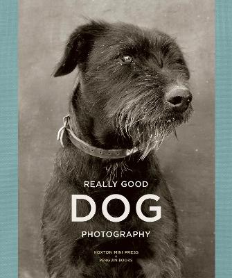 Really Good Dog Photography by Lucy Davies