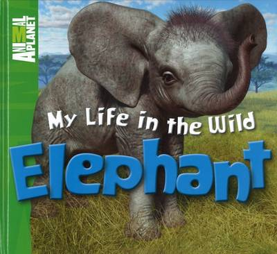 My Life in the Wild - Elephant by Meredith Costain