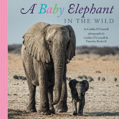 Baby Elephant in the Wild by Caitlin O'Connell