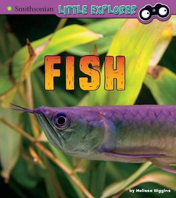 Fish by Melissa Higgins