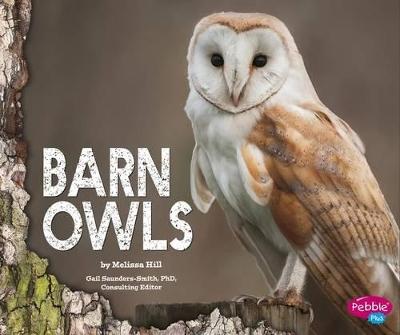 Barn Owls by Melissa Hill
