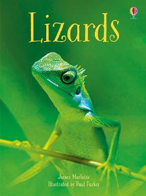 Lizards by James Maclaine