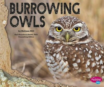 Burrowing Owls by Melissa Hill