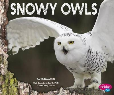 Snowy Owls by Melissa Hill