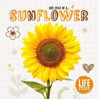 Life Cycle of a Sunflower by Grace Jones
