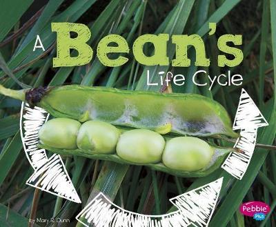 A Bean's Life Cycle by Mary R. Dunn