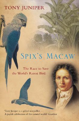 Spix's Macaw by Tony Juniper