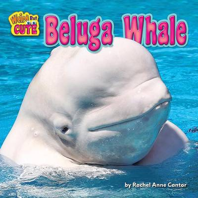 Beluga Whale by Rachel Anne Cantor