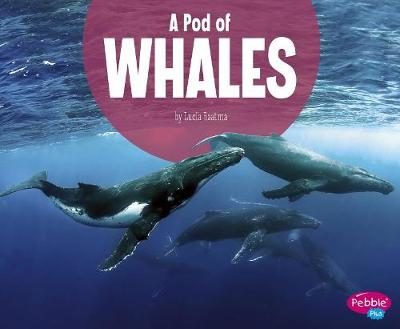 A Pod of Whales by Lucia Raatma