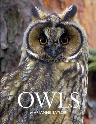 Owls by Marianne Taylor