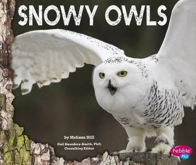 Snowy Owls by Gail Saunders-Smith