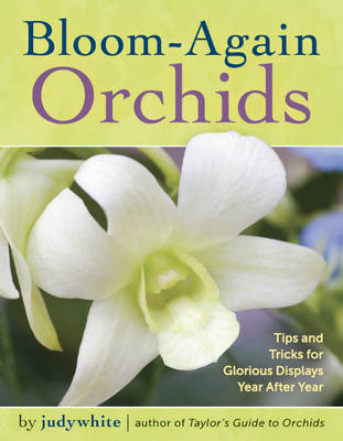 Bloom-Again Orchids by Judywhite