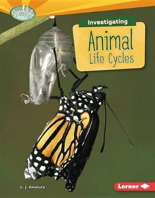 Investigating Animal Life Cycles by L J Amstutz