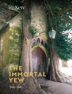 The Immortal Yew by Tony Hall