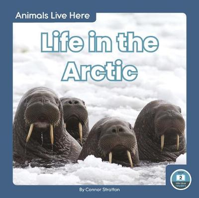 Animals Live Here: Life in the Arctic by Connor Stratton