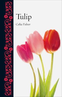 Tulip by Celia Fisher