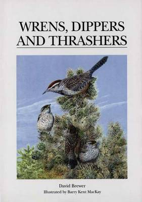 Wrens, Dippers and Thrashers by David Brewer